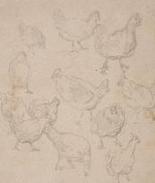 Etude de poules
