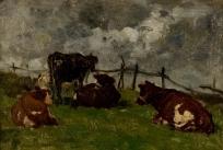 Vaches couchées près d'une barrière