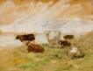Silhouettes de vaches imprécises