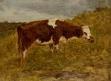 Paysage : une vache rousse
