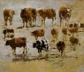 Trois Rangées de vaches