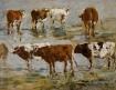 Vaches sur deux rangs