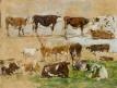 Vaches (étude)