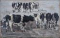 Groupe de vaches noires et blanches