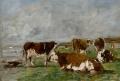 Vaches au pâturage
