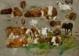 Etude de vaches