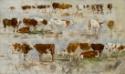 Trois Rangées de vaches sur fond clair