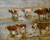 Etude de vaches sur deux rangs au bord de l'eau