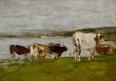 Plusieurs vaches au bord de l'eau, ciel gris