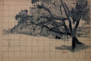 Arbres, Étude de pins