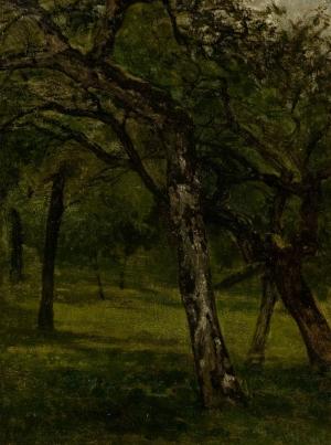 Etude d'arbres : vieux pommiers